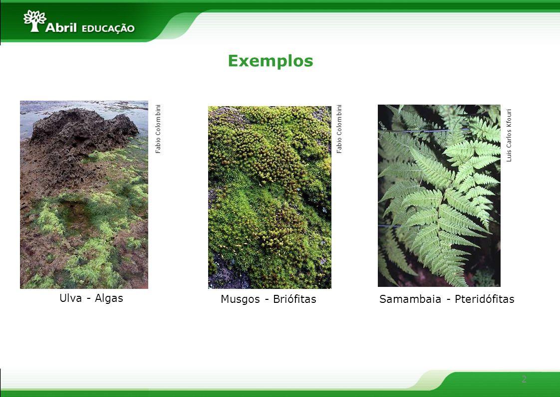 Exemplos Ulva - Algas Musgos - Briófitas Samambaia - Pteridófitas