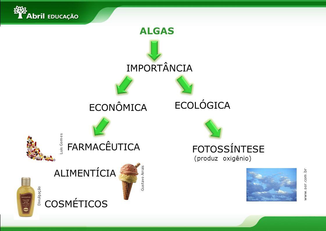 ALGAS IMPORTÂNCIA ECOLÓGICA ECONÔMICA FARMACÊUTICA FOTOSSÍNTESE