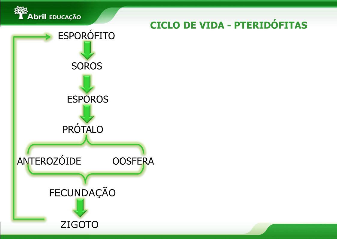 CICLO DE VIDA - PTERIDÓFITAS
