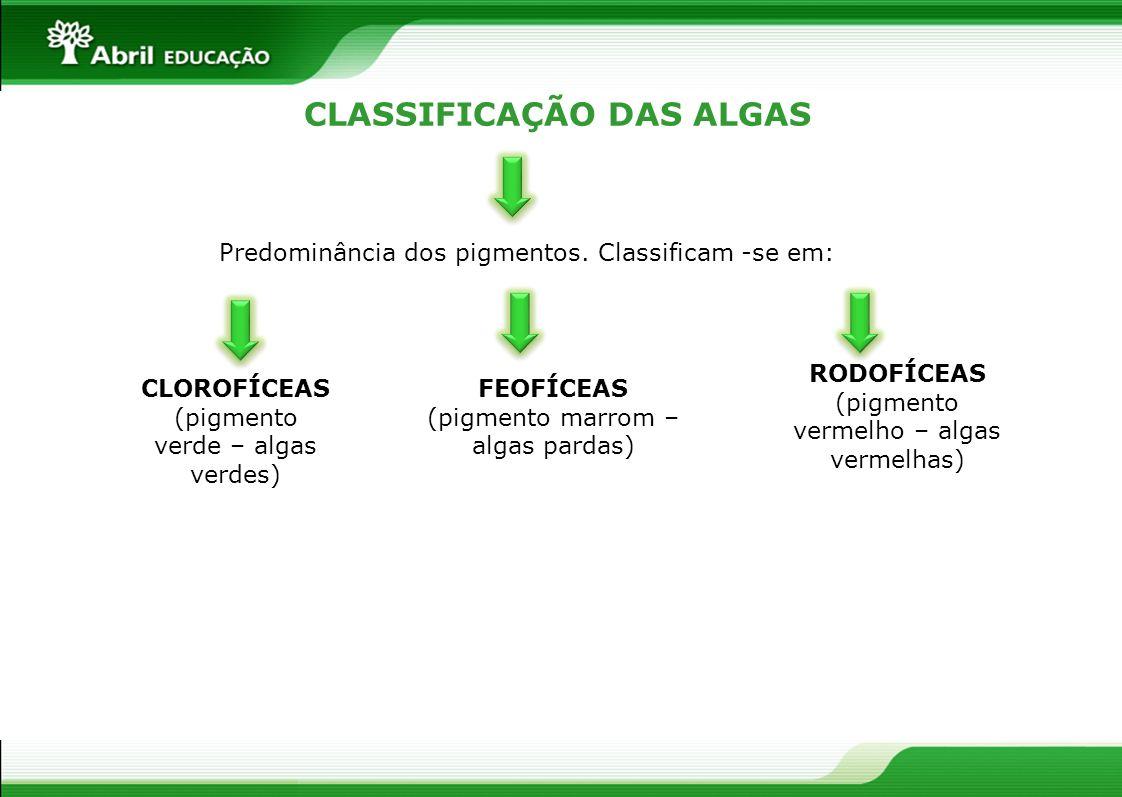 CLASSIFICAÇÃO DAS ALGAS