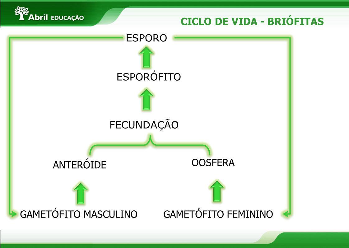 CICLO DE VIDA - BRIÓFITAS