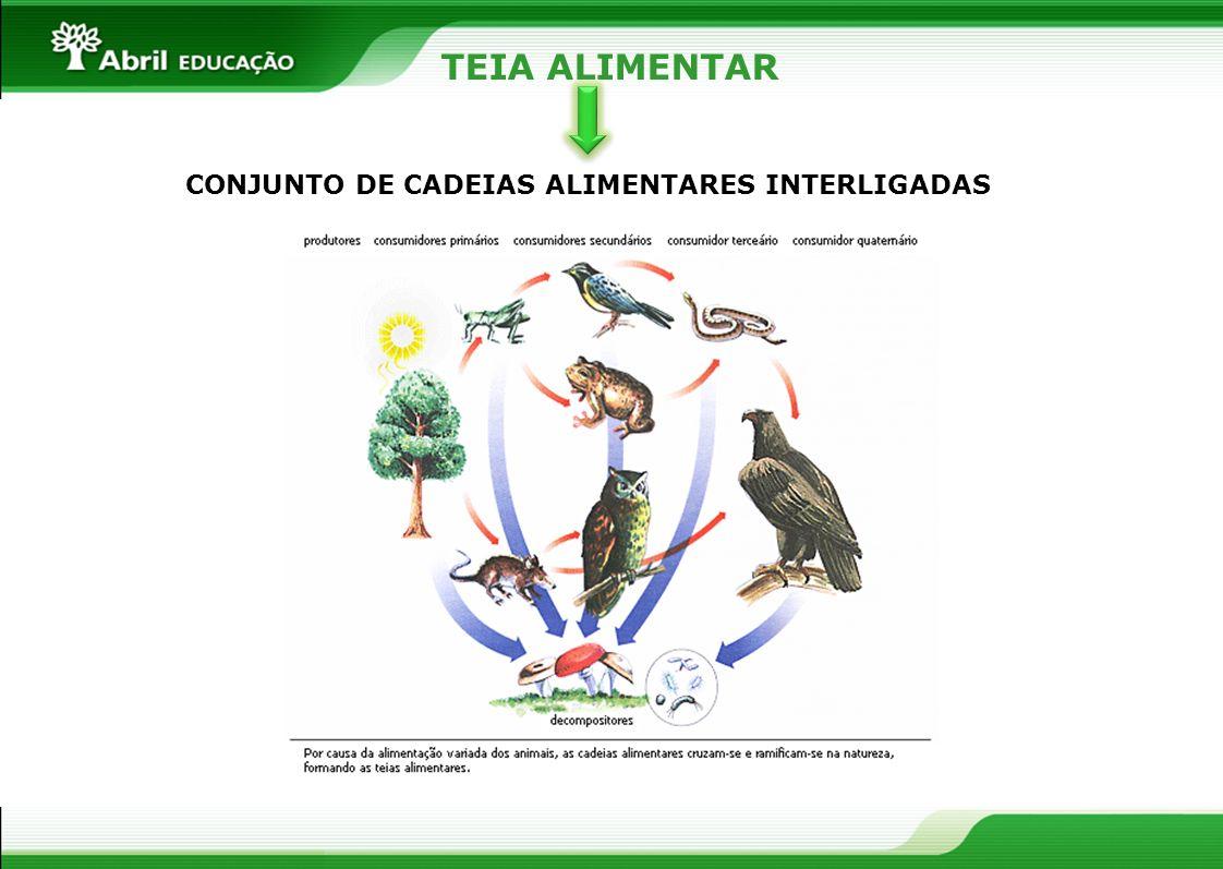 TEIA ALIMENTAR CONJUNTO DE CADEIAS ALIMENTARES INTERLIGADAS