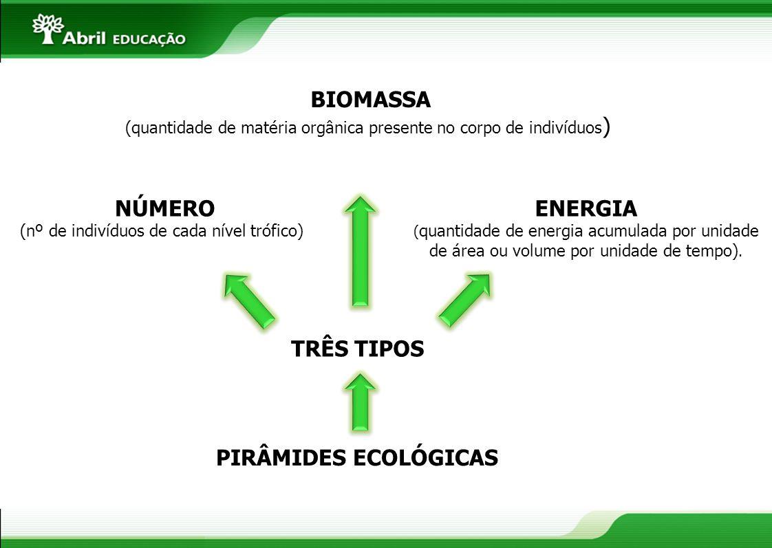 BIOMASSA NÚMERO ENERGIA TRÊS TIPOS