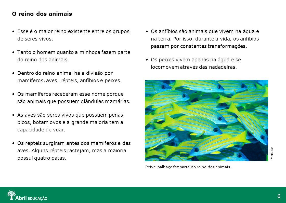 Os anfíbios são animais que vivem na água e na terra