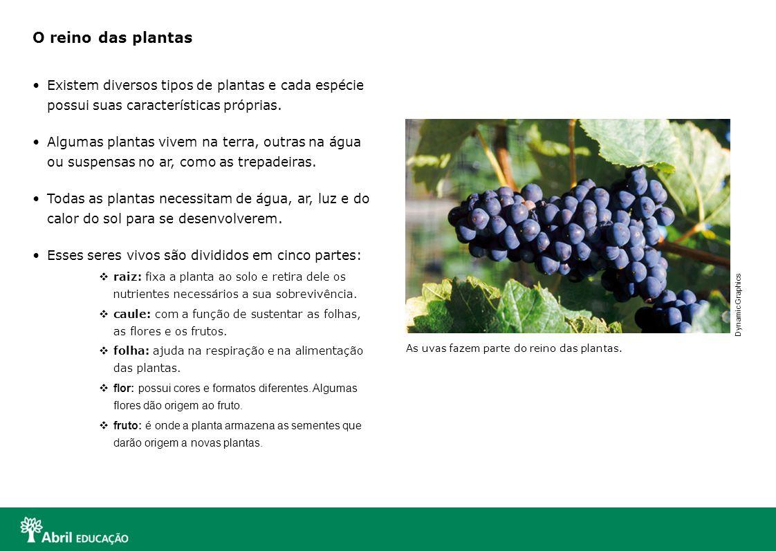 O reino das plantas Existem diversos tipos de plantas e cada espécie possui suas características próprias.
