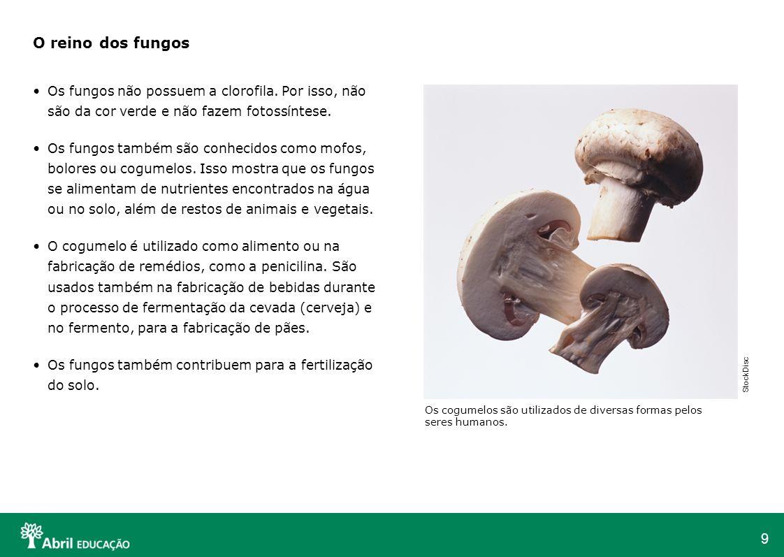 O reino dos fungos Os fungos não possuem a clorofila. Por isso, não são da cor verde e não fazem fotossíntese.