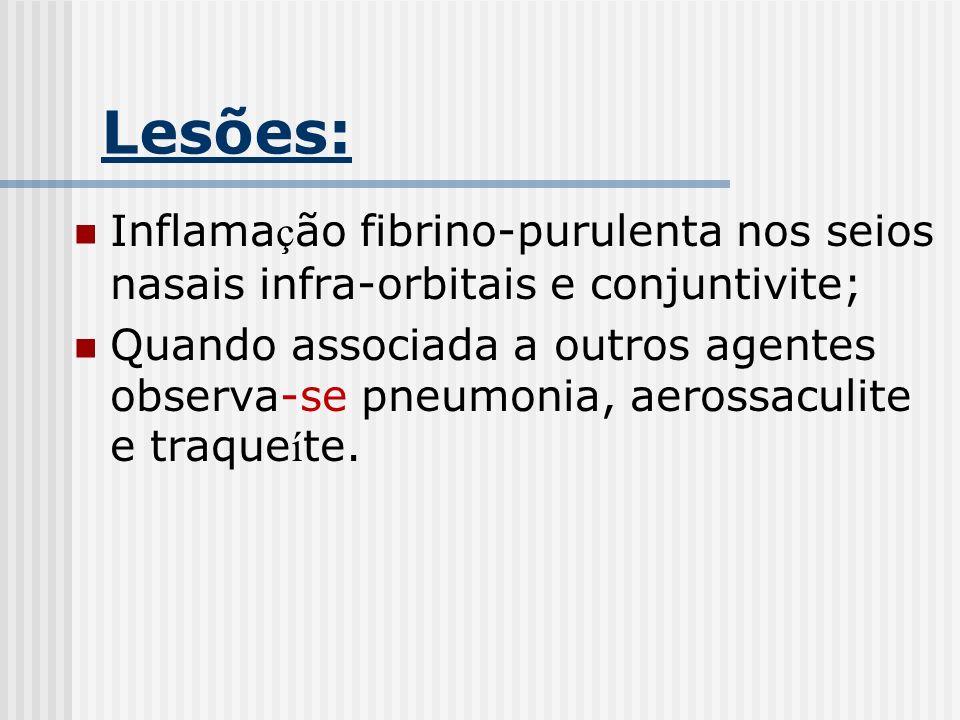 Lesões: Inflamação fibrino-purulenta nos seios nasais infra-orbitais e conjuntivite;
