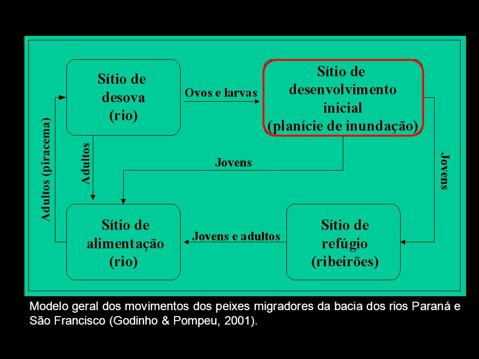 Modelo geral dos movimentos dos peixes migradores da bacia dos rios Paraná e São Francisco (Godinho & Pompeu, 2001).