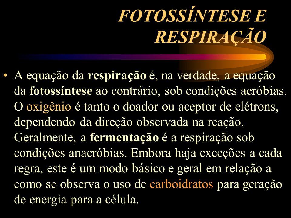 FOTOSSÍNTESE E RESPIRAÇÃO