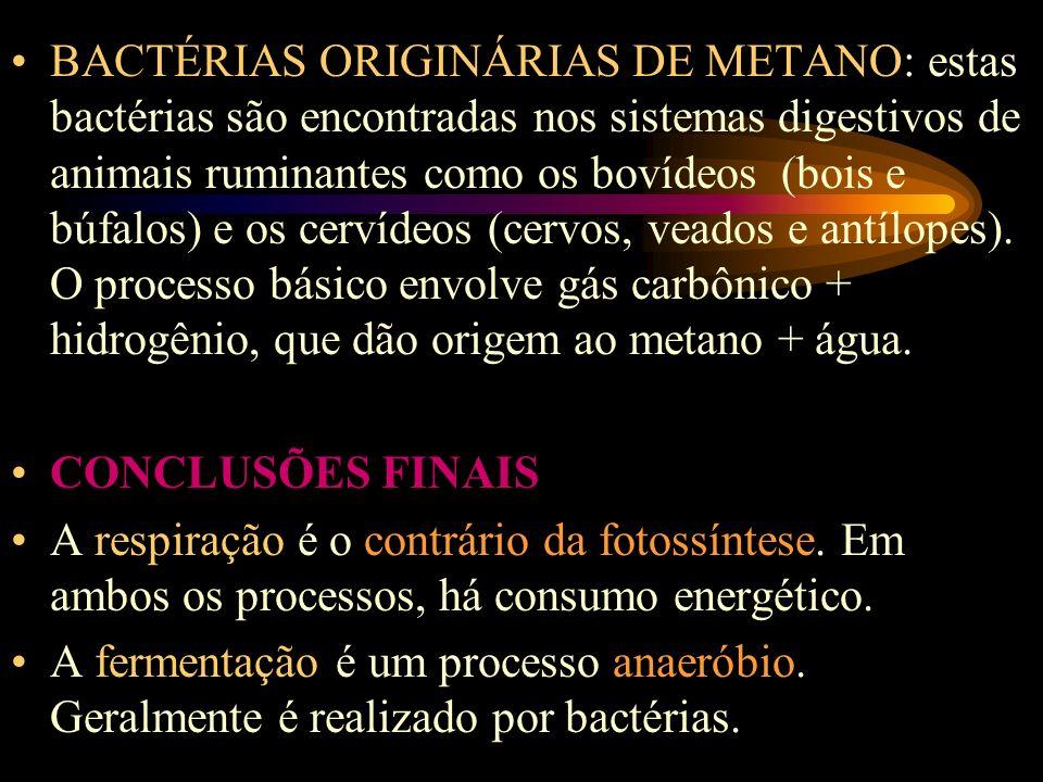 BACTÉRIAS ORIGINÁRIAS DE METANO: estas bactérias são encontradas nos sistemas digestivos de animais ruminantes como os bovídeos (bois e búfalos) e os cervídeos (cervos, veados e antílopes). O processo básico envolve gás carbônico + hidrogênio, que dão origem ao metano + água.