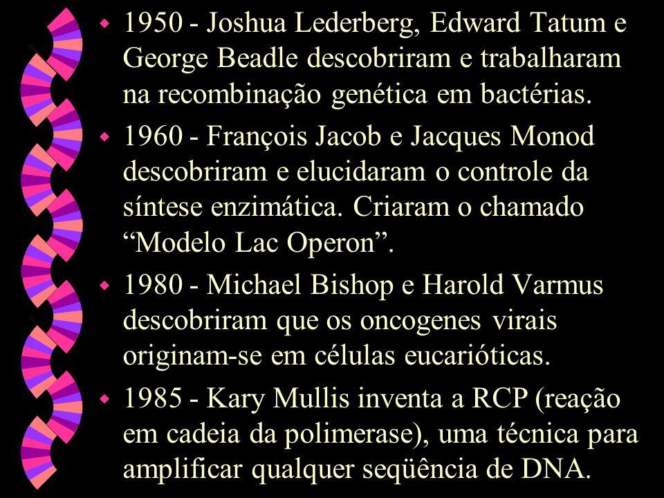 1950 - Joshua Lederberg, Edward Tatum e George Beadle descobriram e trabalharam na recombinação genética em bactérias.