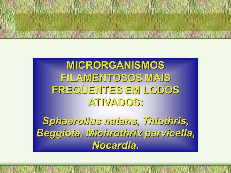 MICRORGANISMOS FILAMENTOSOS MAIS FREQÜENTES EM LODOS ATIVADOS: