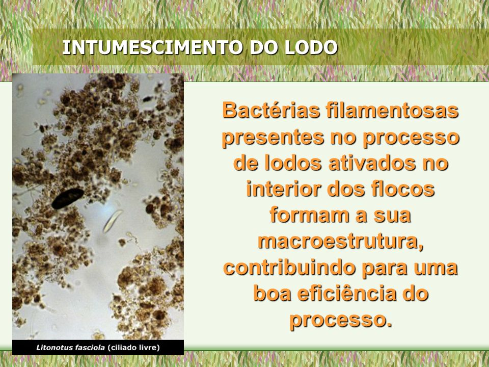 INTUMESCIMENTO DO LODO