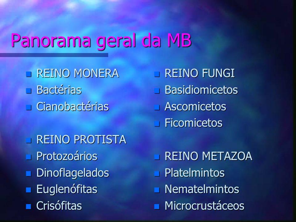 Panorama geral da MB REINO MONERA Bactérias Cianobactérias