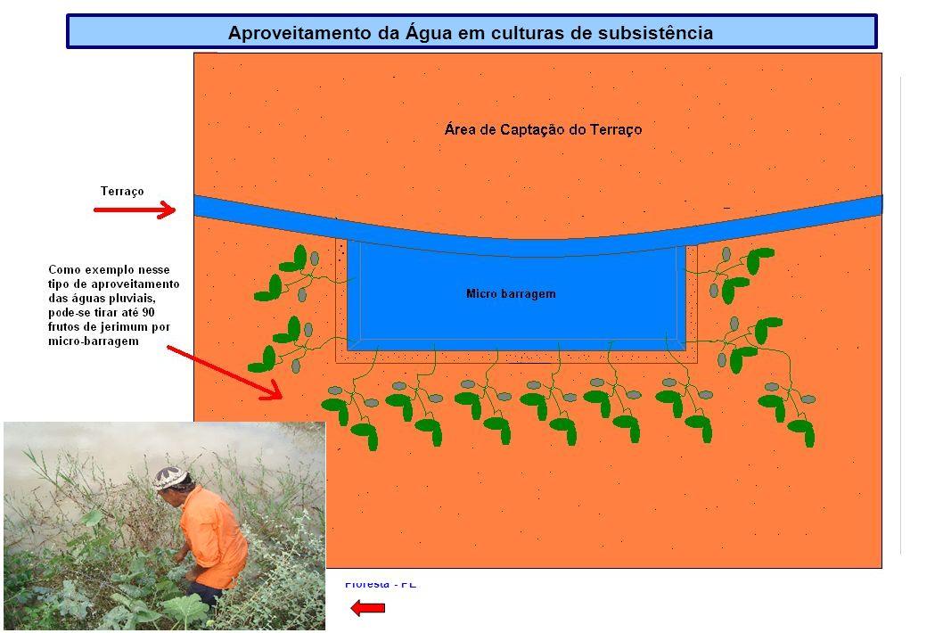Aproveitamento da Água em culturas de subsistência
