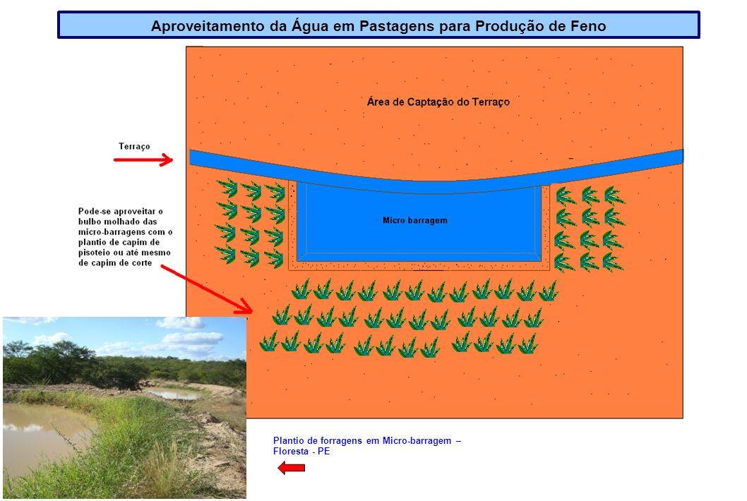 Aproveitamento da Água em Pastagens para Produção de Feno