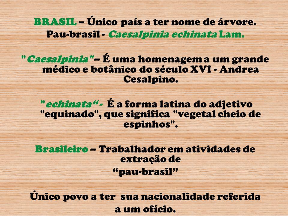 BRASIL – Único país a ter nome de árvore.