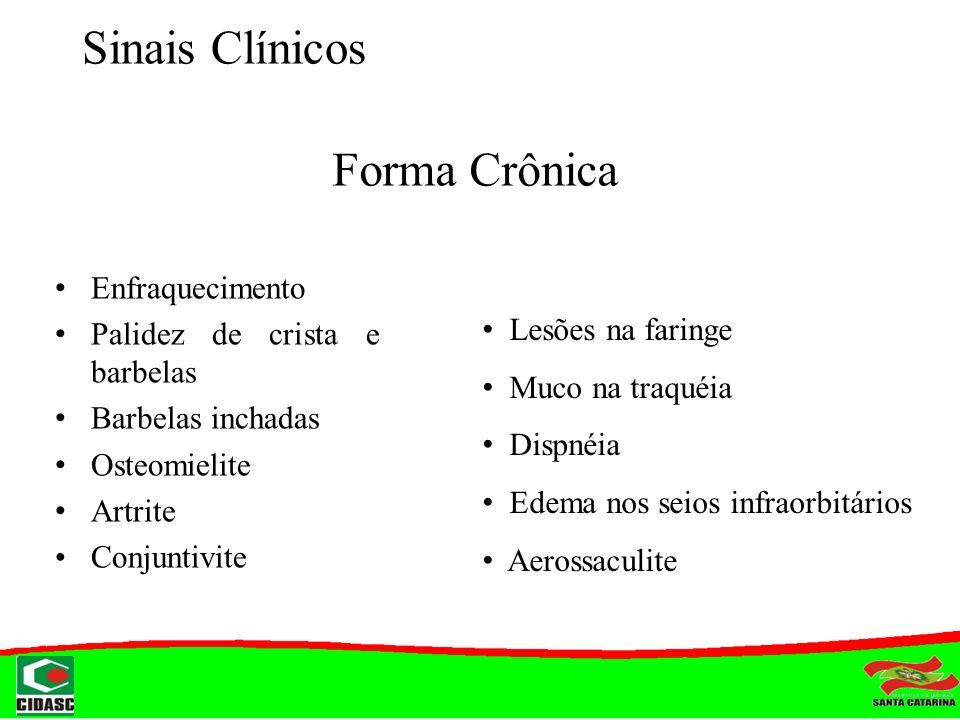 Sinais Clínicos Forma Crônica Enfraquecimento