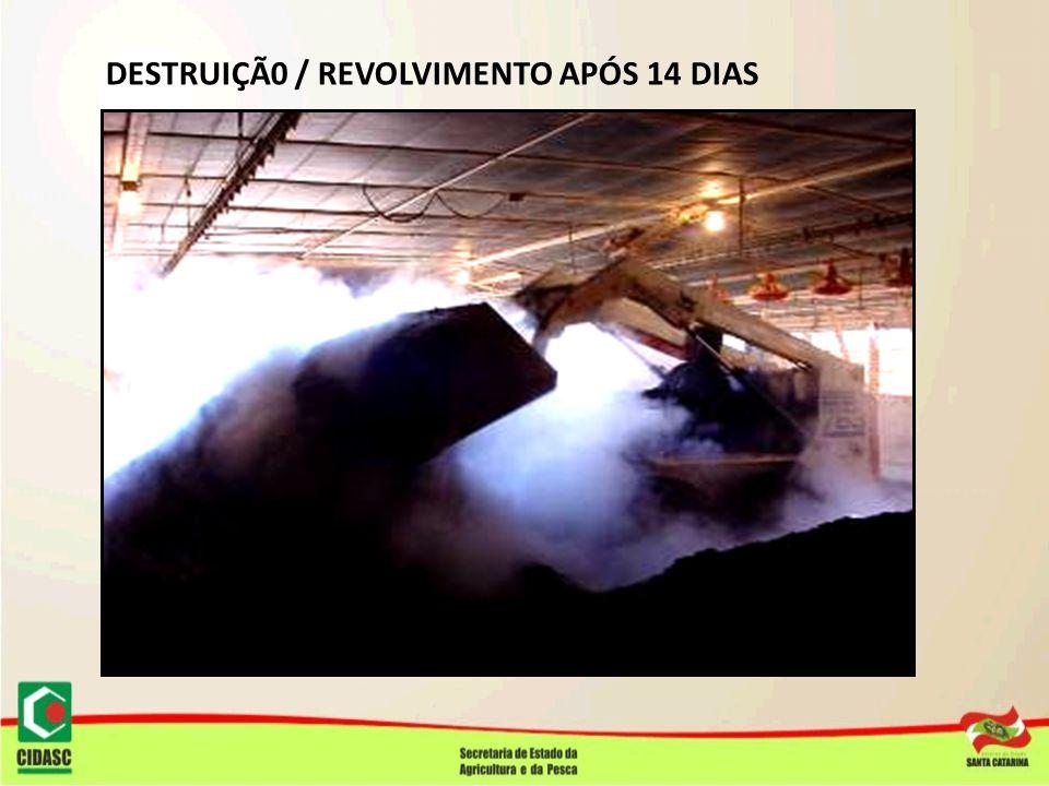 DESTRUIÇÃ0 / REVOLVIMENTO APÓS 14 DIAS