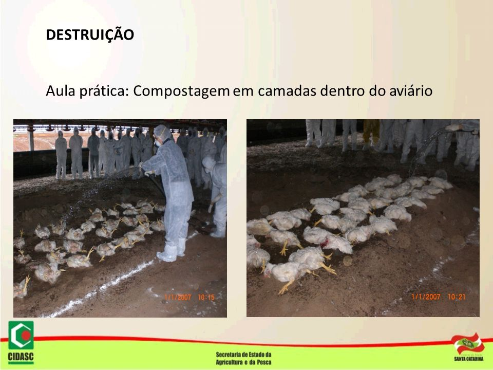 DESTRUIÇÃO Aula prática: Compostagem em camadas dentro do aviário