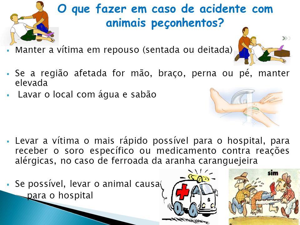 O que fazer em caso de acidente com animais peçonhentos
