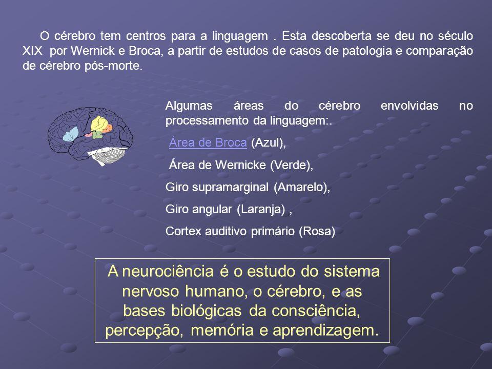 O cérebro tem centros para a linguagem