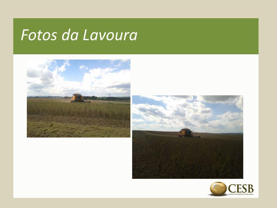 Fotos da Lavoura