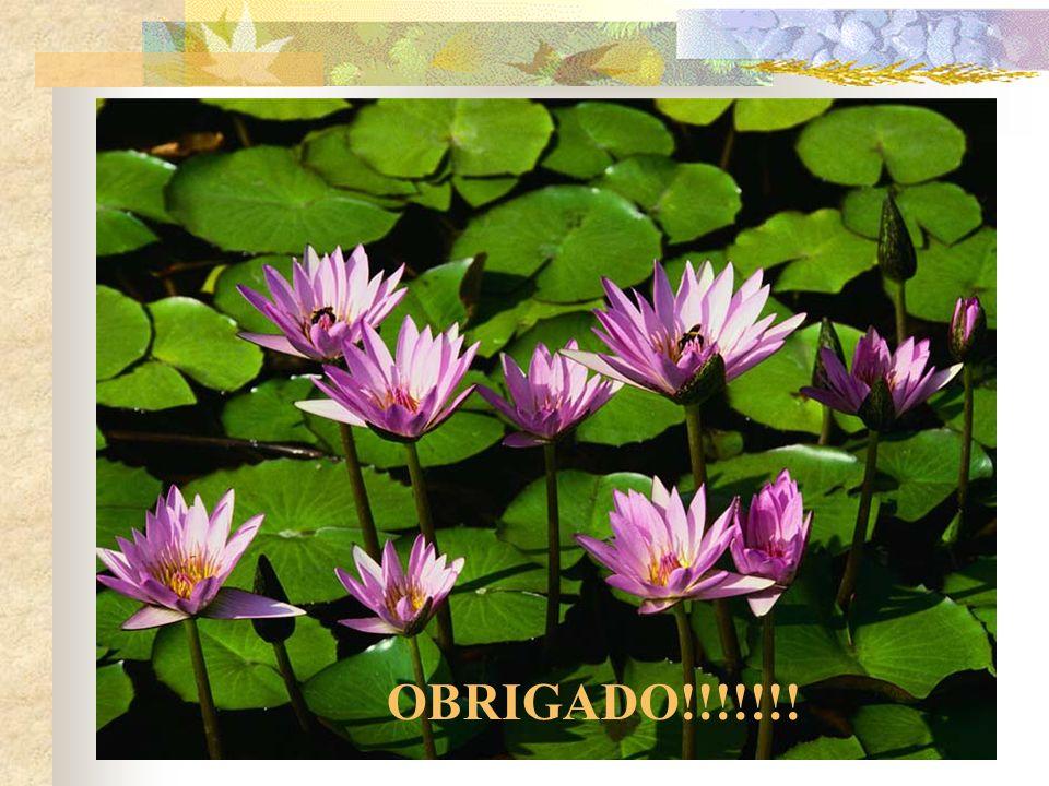 OBRIGADO!!!!!!!