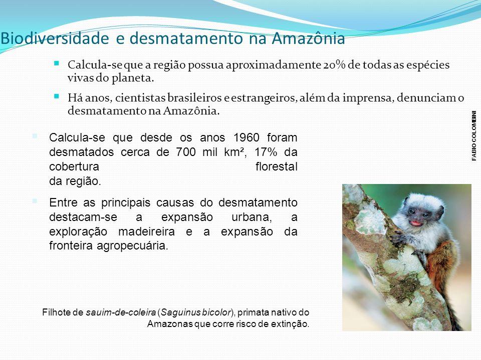 Biodiversidade e desmatamento na Amazônia
