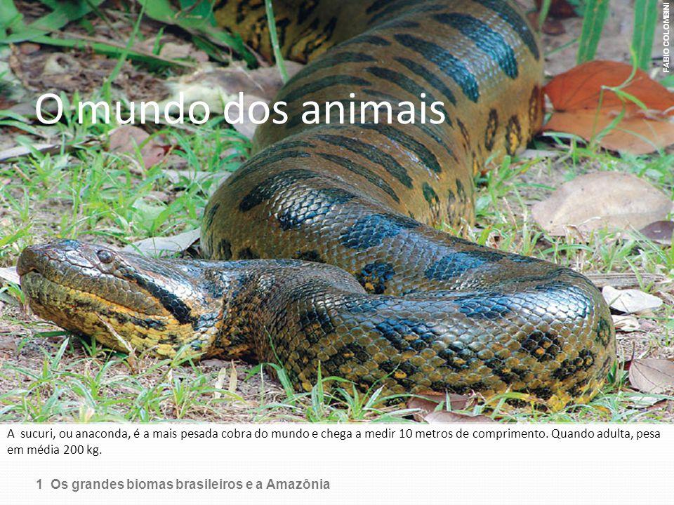 FABIO COLOMBINI O mundo dos animais.