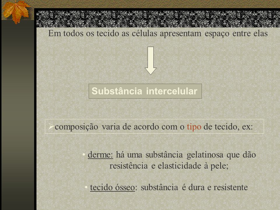 Substância intercelular