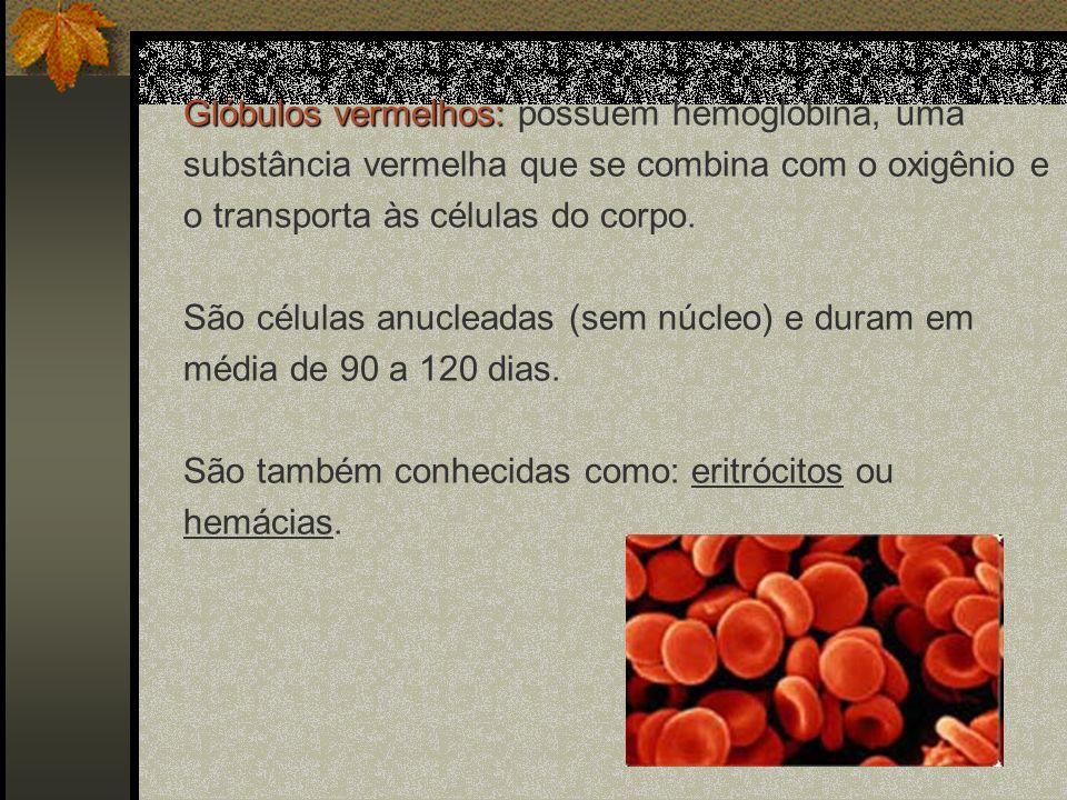 Glóbulos vermelhos: possuem hemoglobina, uma substância vermelha que se combina com o oxigênio e o transporta às células do corpo.