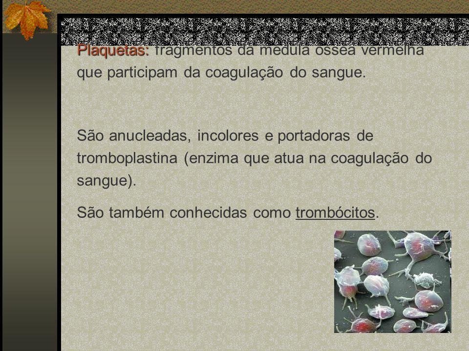 Plaquetas: fragmentos da medula óssea vermelha que participam da coagulação do sangue.