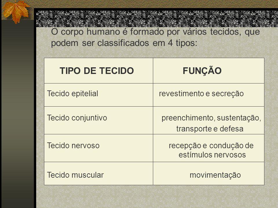 O corpo humano é formado por vários tecidos, que podem ser classificados em 4 tipos:
