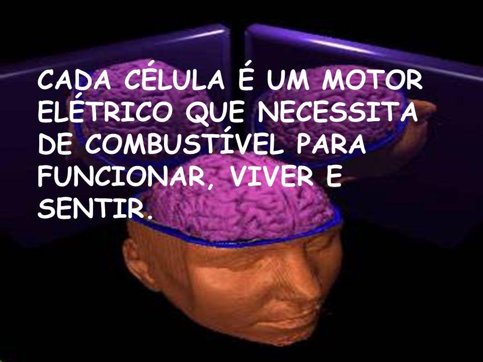 CADA CÉLULA É UM MOTOR ELÉTRICO QUE NECESSITA DE COMBUSTÍVEL PARA FUNCIONAR, VIVER E SENTIR.