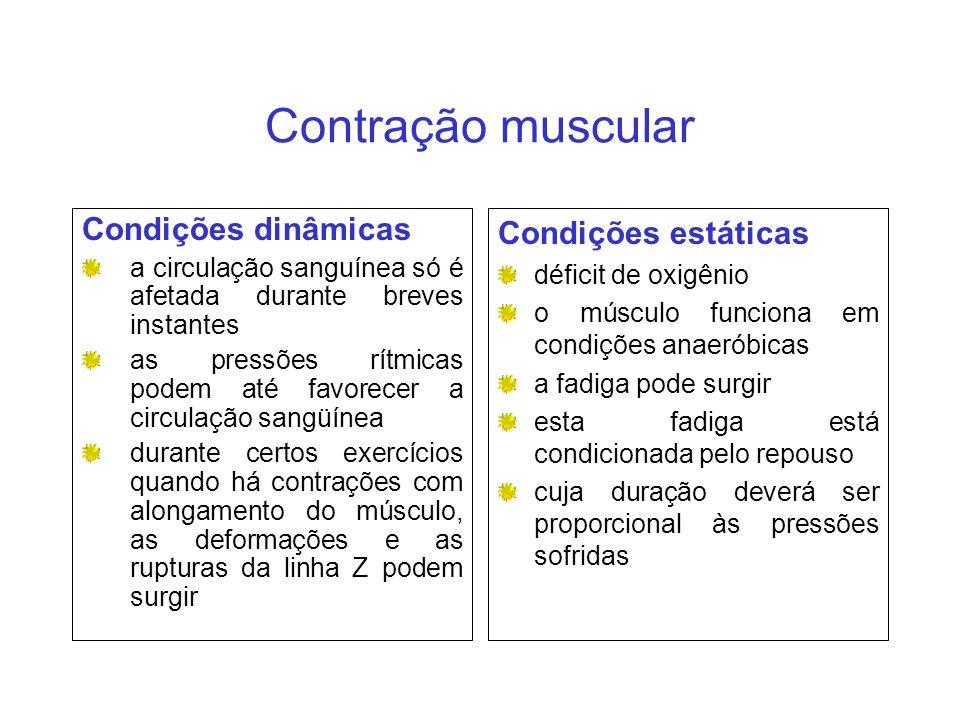 Contração muscular Condições dinâmicas Condições estáticas