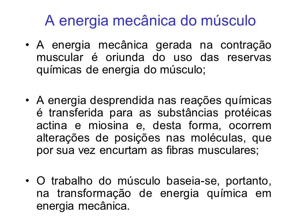 A energia mecânica do músculo