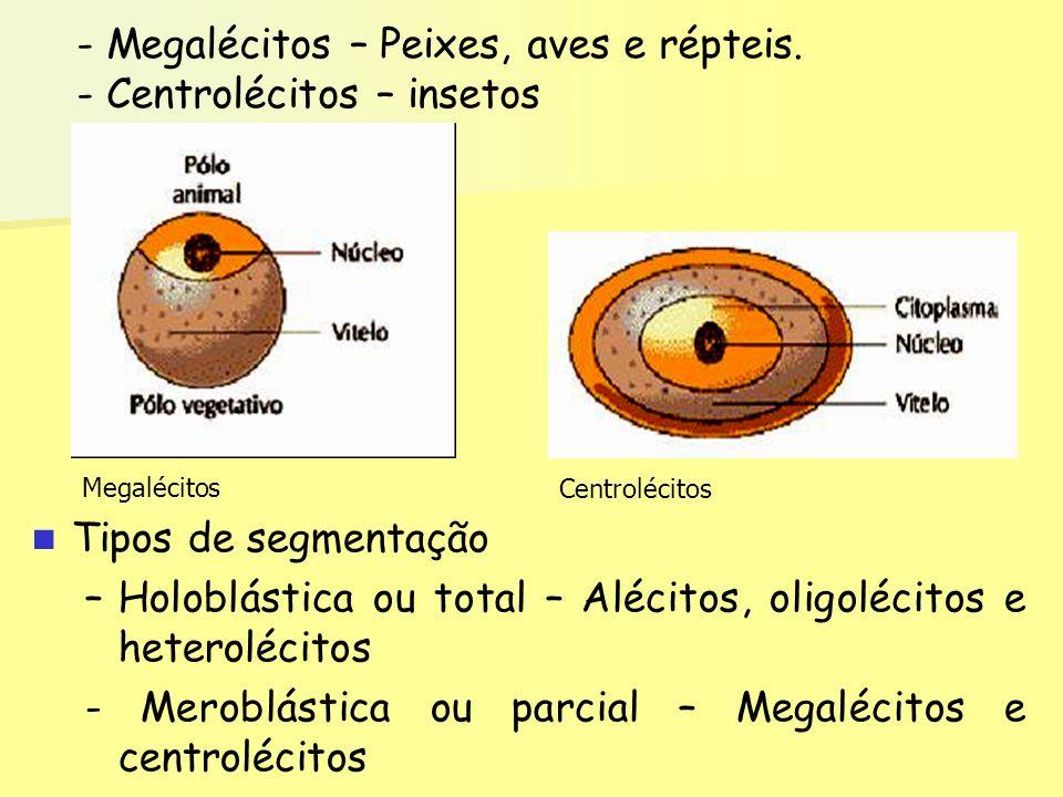 Megalécitos – Peixes, aves e répteis. - Centrolécitos – insetos