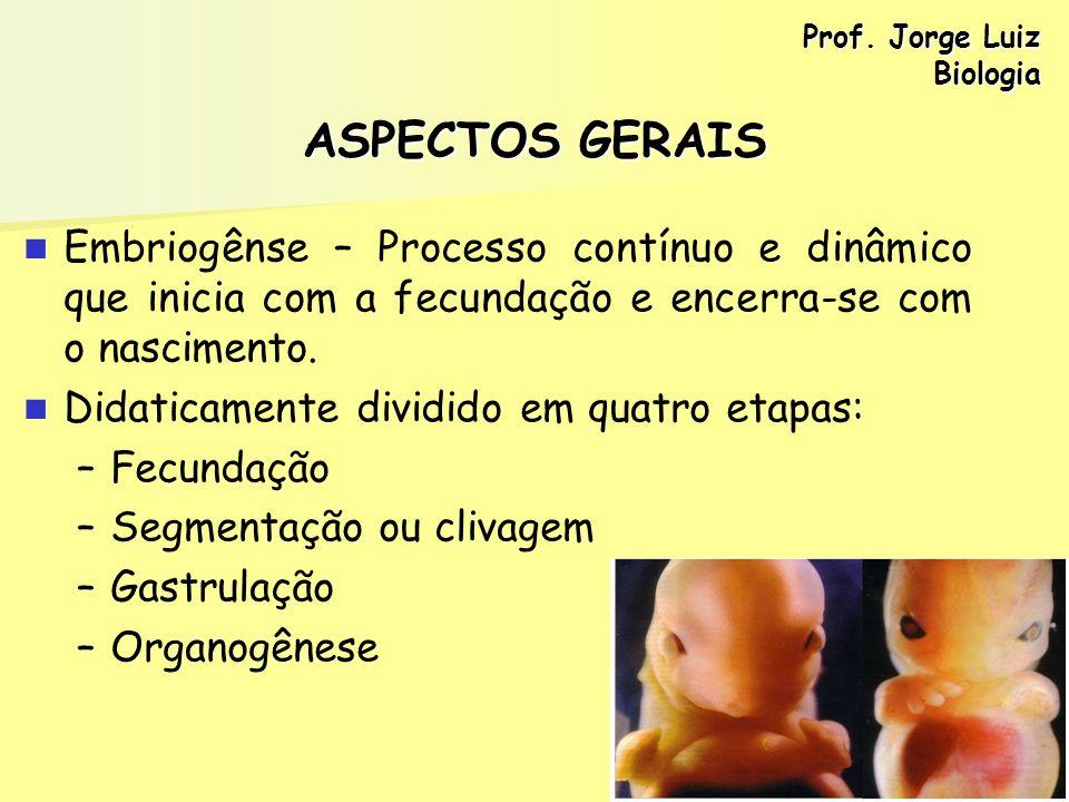 Prof. Jorge Luiz Biologia. ASPECTOS GERAIS. Embriogênse – Processo contínuo e dinâmico que inicia com a fecundação e encerra-se com o nascimento.