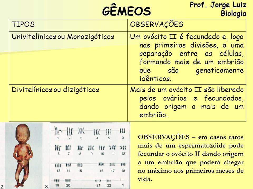 GÊMEOS Prof. Jorge Luiz Biologia TIPOS OBSERVAÇÕES