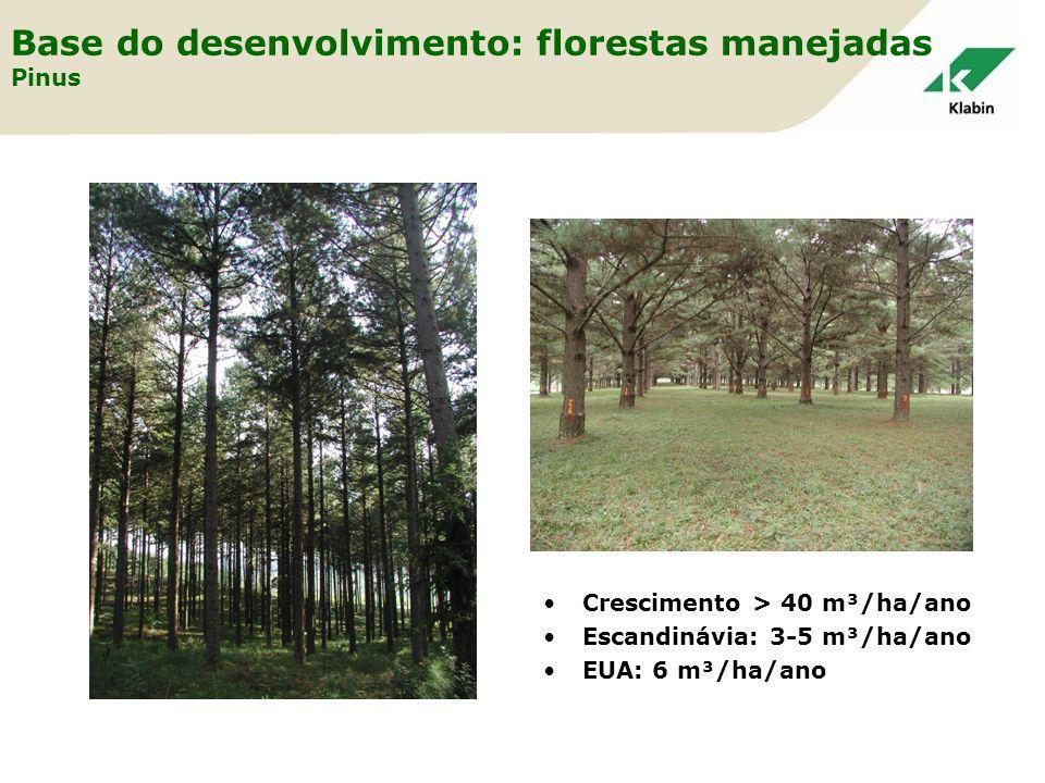 Base do desenvolvimento: florestas manejadas Pinus