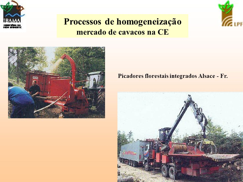 Processos de homogeneização mercado de cavacos na CE