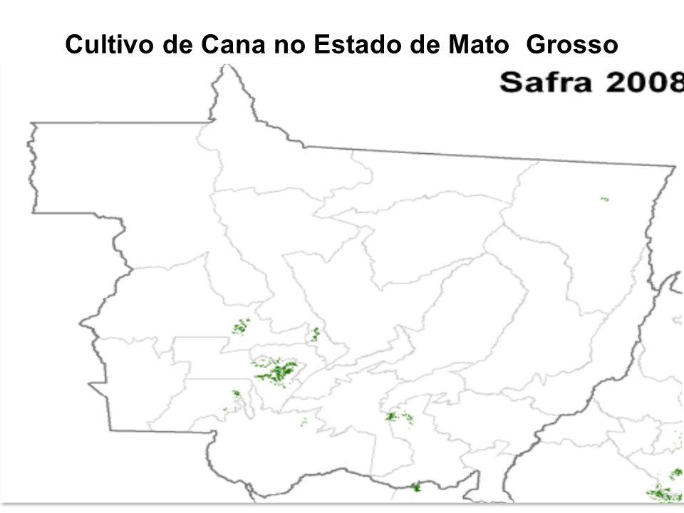 Cultivo de Cana no Estado de Mato Grosso