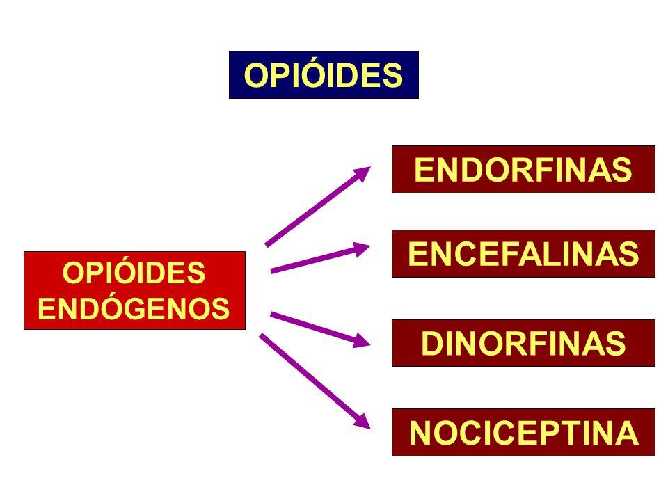 OPIÓIDES ENDORFINAS ENCEFALINAS DINORFINAS NOCICEPTINA