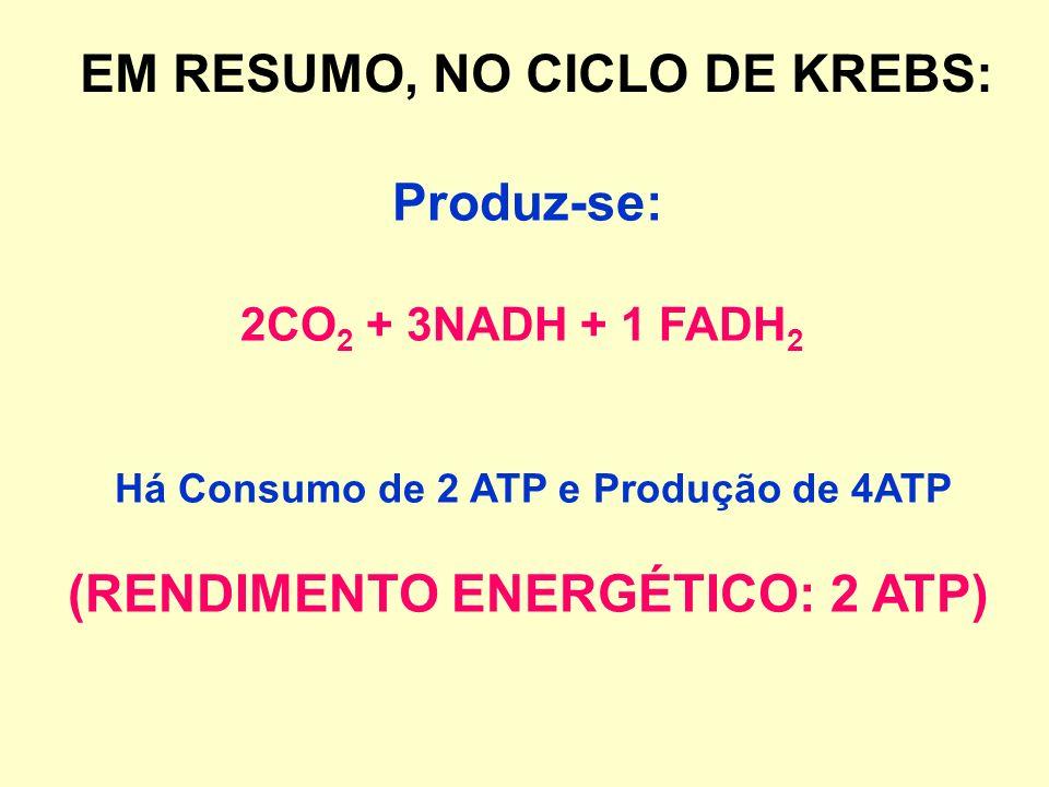 Há Consumo de 2 ATP e Produção de 4ATP (RENDIMENTO ENERGÉTICO: 2 ATP)