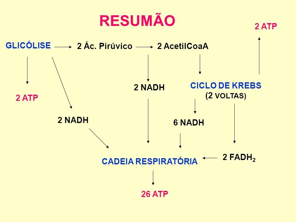 RESUMÃO 2 ATP GLICÓLISE 2 Ác. Pirúvico 2 AcetilCoaA CICLO DE KREBS
