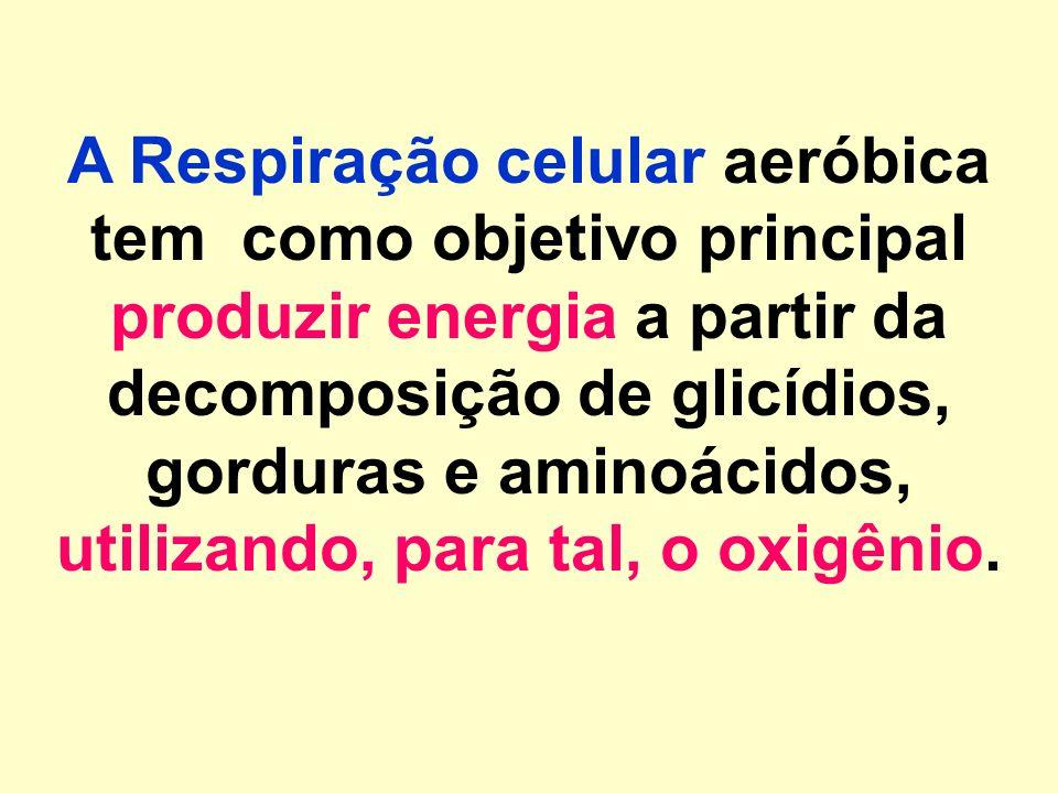 A Respiração celular aeróbica tem como objetivo principal produzir energia a partir da decomposição de glicídios, gorduras e aminoácidos, utilizando, para tal, o oxigênio.