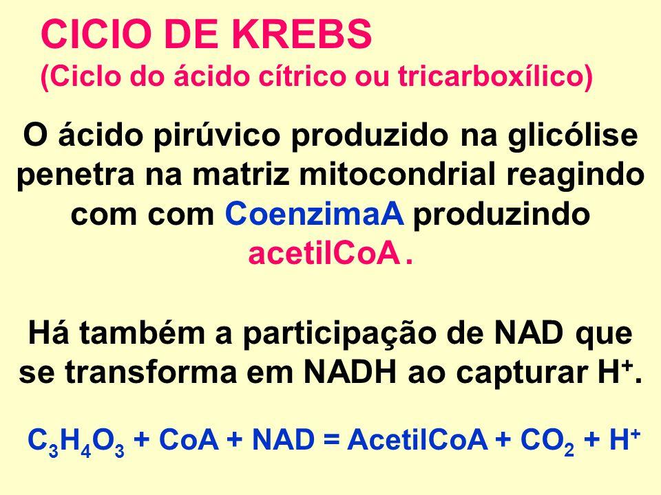 CICIO DE KREBS (Ciclo do ácido cítrico ou tricarboxílico)