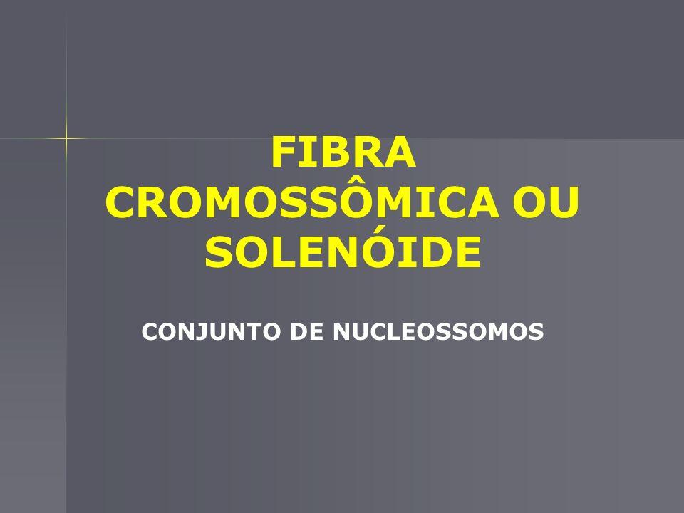 FIBRA CROMOSSÔMICA OU SOLENÓIDE CONJUNTO DE NUCLEOSSOMOS
