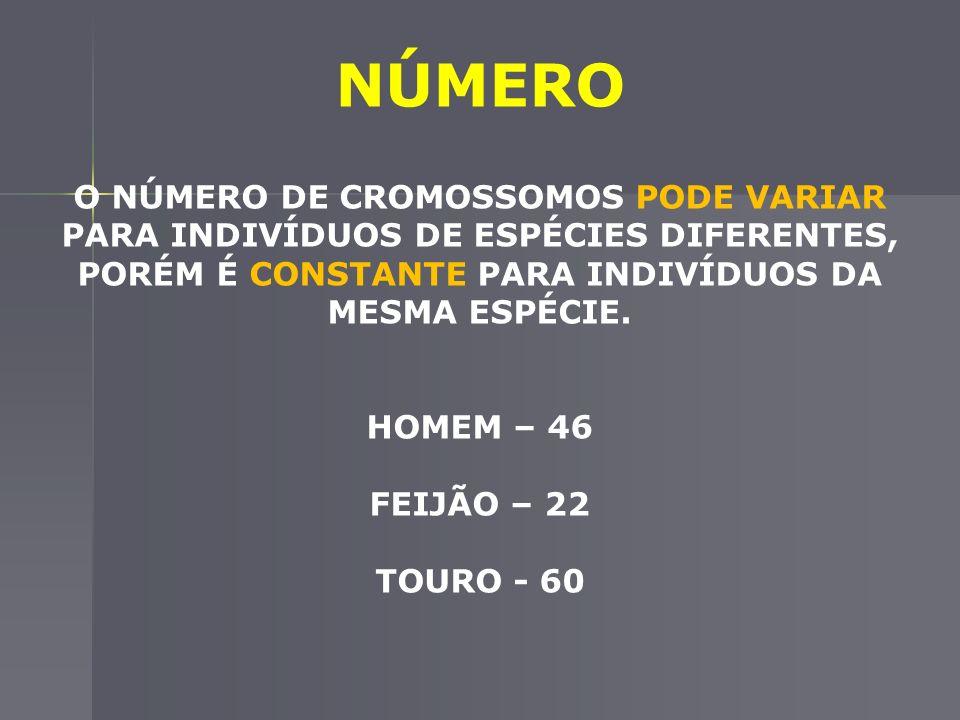 NÚMERO O NÚMERO DE CROMOSSOMOS PODE VARIAR PARA INDIVÍDUOS DE ESPÉCIES DIFERENTES, PORÉM É CONSTANTE PARA INDIVÍDUOS DA MESMA ESPÉCIE.
